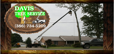 Tree Removal Logo Davis Tree Service