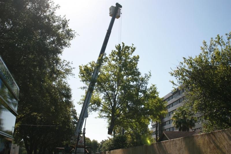 Tree Job - July 5th 2016 085