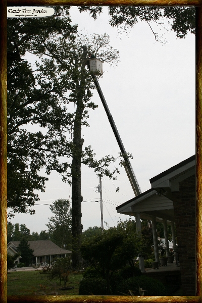 boarder-with-logs-pics-285