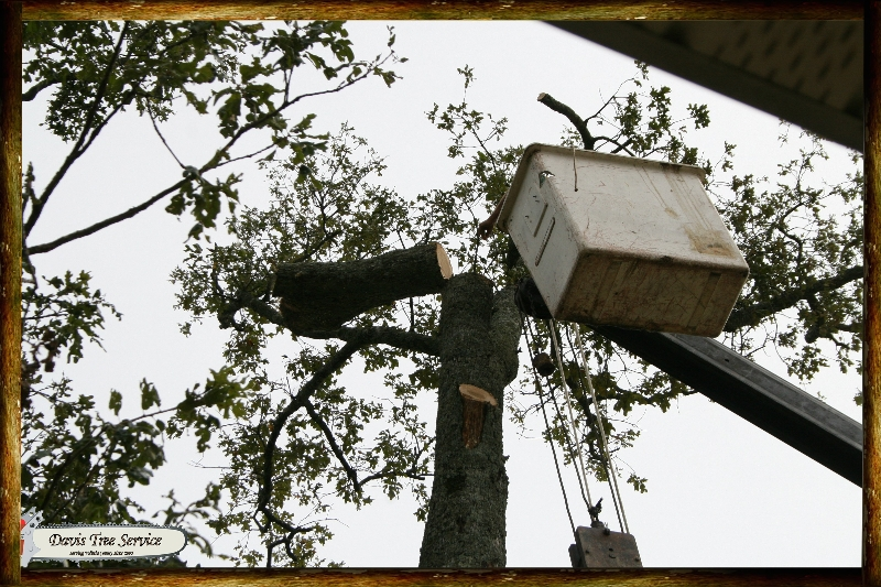 boarder-with-logs-pics-321