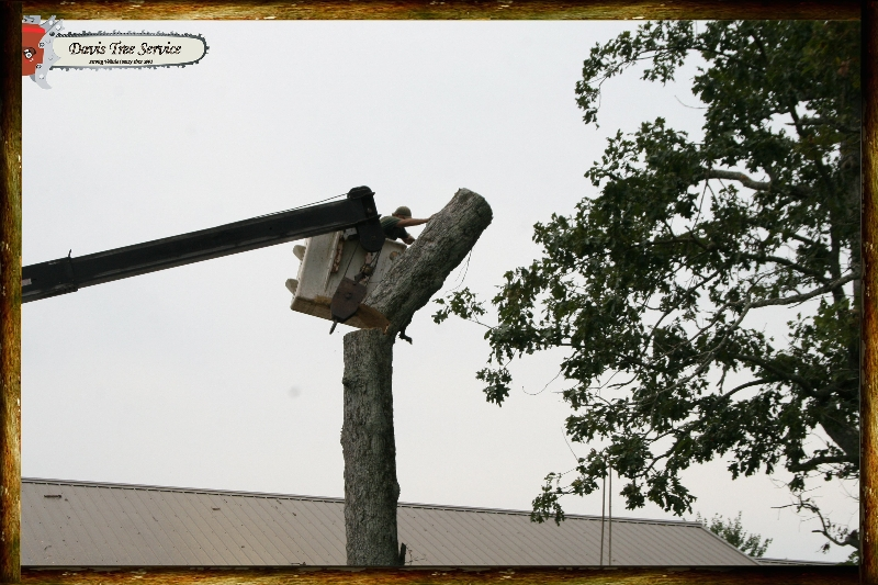 boarder-with-logs-pics-429