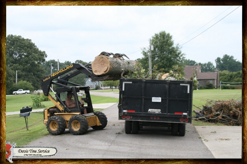boarder-with-logs-pics-433