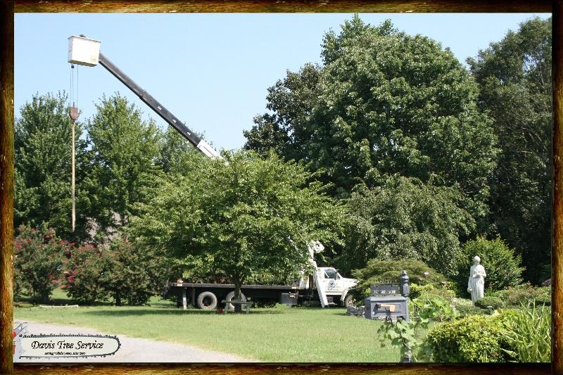 davis-tree-crane-work-sheree-practice-shooting-tn-119