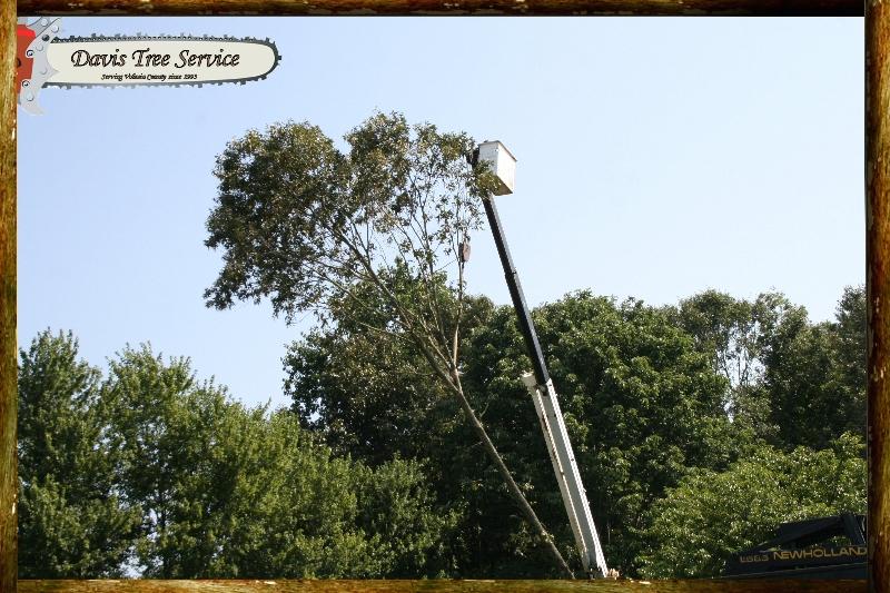 davis-tree-tn-078-wood