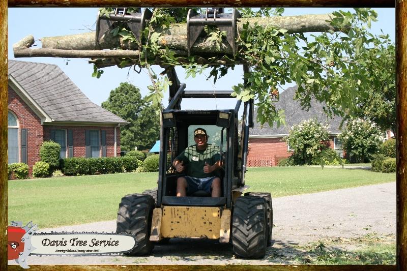 davis-tree-tn-114-wood