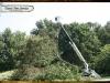davis-tree-tn-88-wood